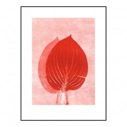 Pernille Folcarelli Hosta Scarlet 30x40 cm-20