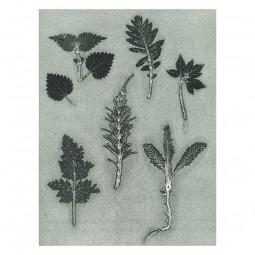 Pernille Folcarelli Garden Herbs 30x40 cm-20