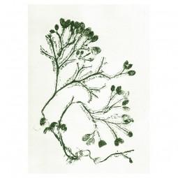 Pernille Folcarelli Seaweed Green Tapet-20
