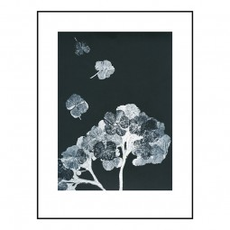 Pernille Folcarelli Hortensia Black 30x40 cm-20