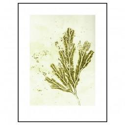 Pernille Folcarelli Seaweed Ochre Green 30x40 cm-20