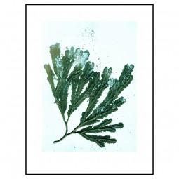 Pernille Folcarelli Seaweed Sea Green 30x40 cm-20