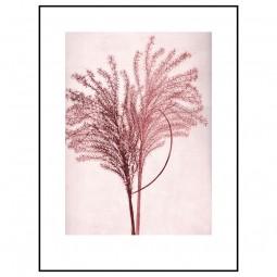 Pernille Folcarelli Silvergrass Sunrise 30x40 cm-20