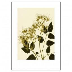 Pernille Folcarelli Clematis Ochre Green 50x70 cm-20