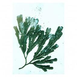 Pernille Folcarelli Seweed Sea Green Tapet-20