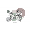 """Kasia Lilja """"Miss Bird"""" for SternShop (Version 2)-01"""